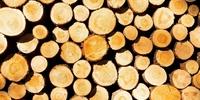 Effusivité thermique de différentes essences de bois